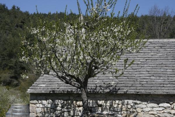 printemps  2011 002