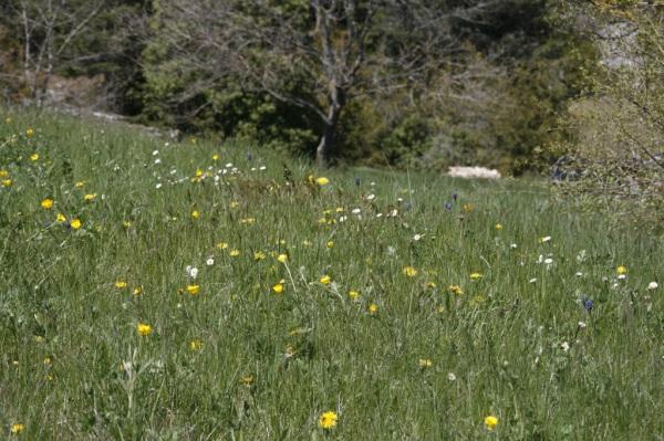 printemps  2011 005