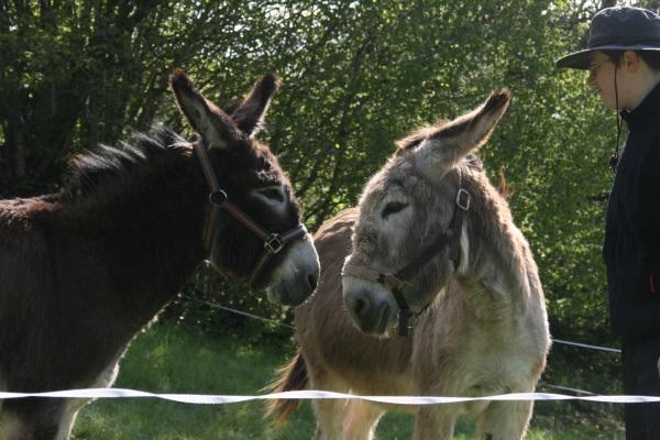 Visite des ânes 26mai2013 022