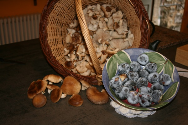 champigons et confiture septembre 2013 043