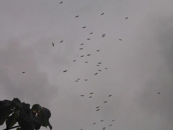 vautours 468
