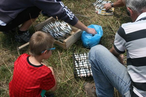 Préparation des sardines dans les grills