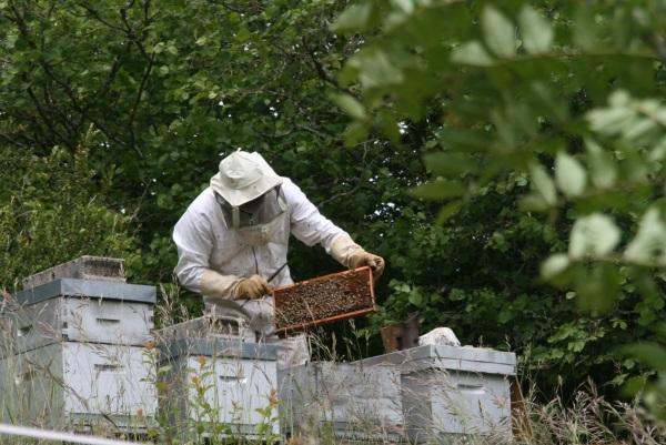 Juin : visite au rucher. TOUT VA BIEN  !!!!!!!!