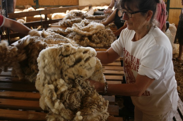 Magnifique pièce de laine
