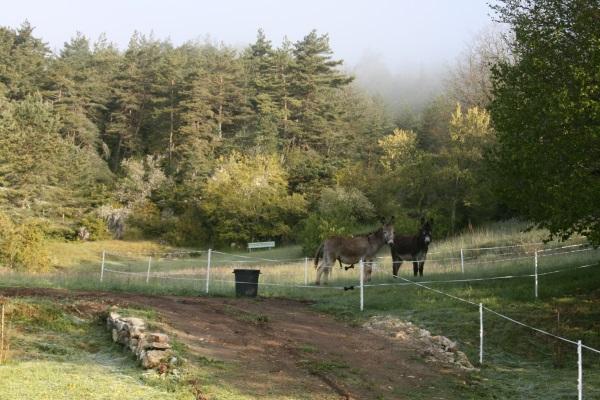 Visite des ânes 26mai2013 008