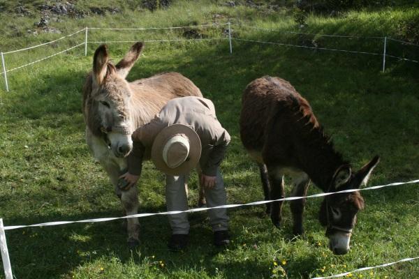 Visite des ânes 26mai2013 016