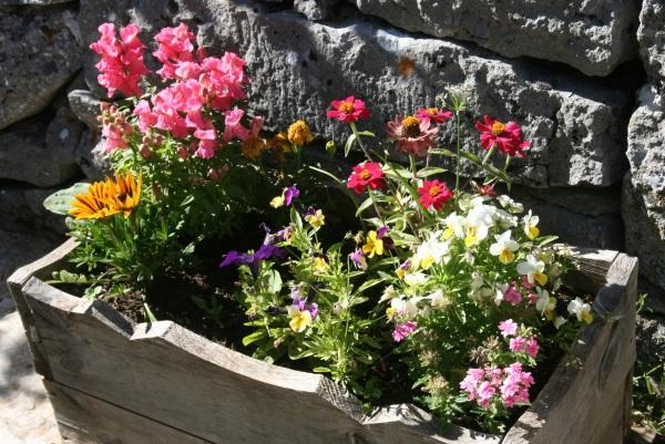 Fleurs dans le soleil