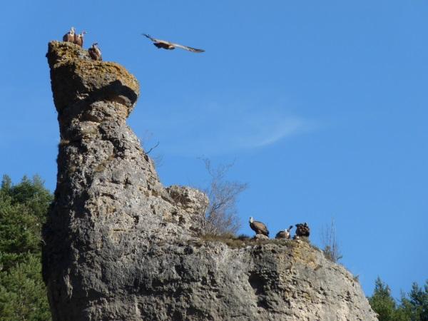 Les vautours semblent nous attendre !!